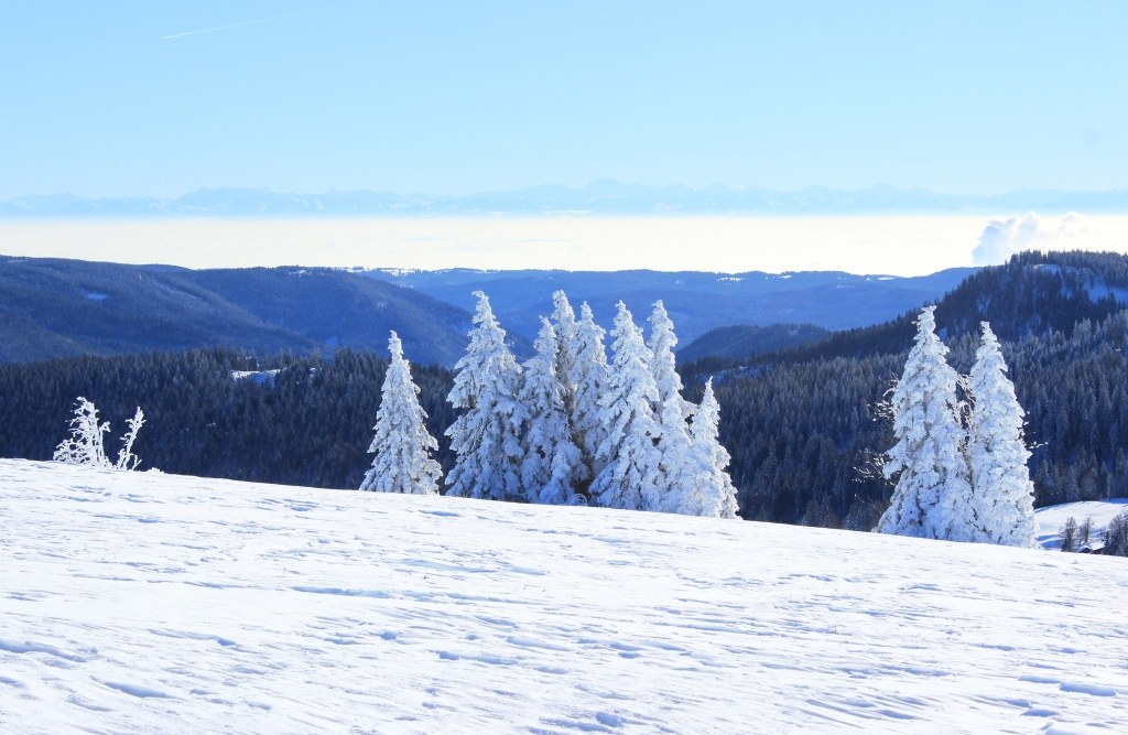 Alps in the distance seen from Feldberg