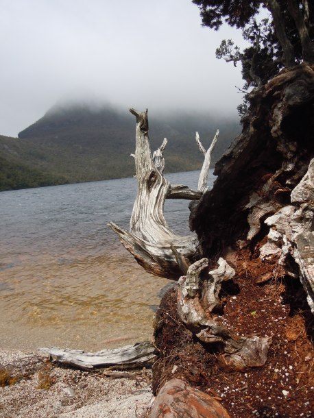 At Cradle Mountains