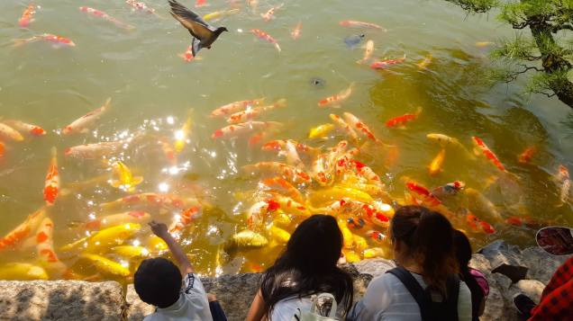 children feeding Koi and turtles at Korakuen