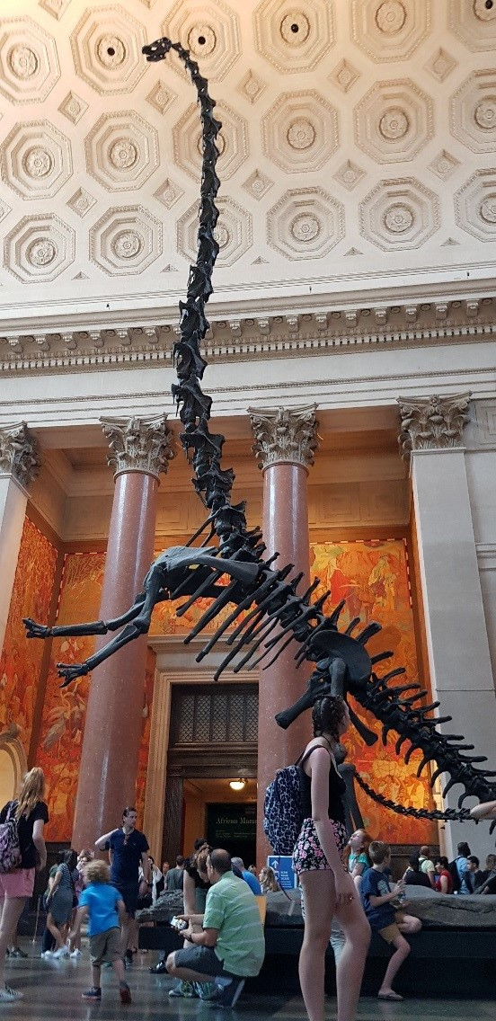 The American Museum of Natural History, NY