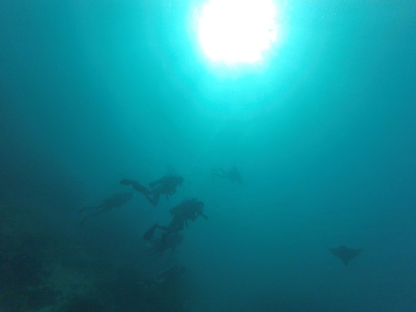 My dive buddy and I saw a spotted eagle ray on our last dive -- turns out he's Stumpy, a famous ray on the island known for his stumpy tail!