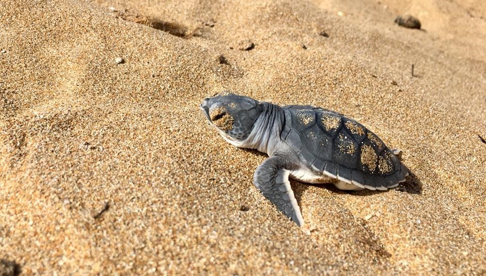 Sea turtle preservation in Northern Cyprus