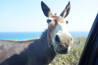 9. A free Cyprus donkey (another protected species) that lives in the Karpaz National Park. It stopped our car to ask for some food 😊