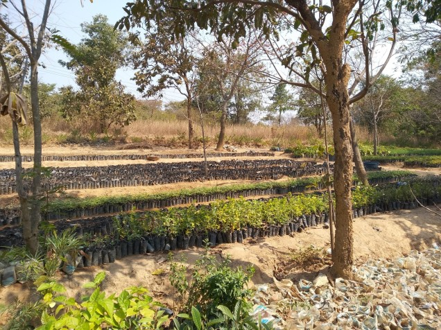 The Songwe regional council owns a big tree nursery and we visited it to donate more tree seeds, that once grown into seedlings would be given to the community.