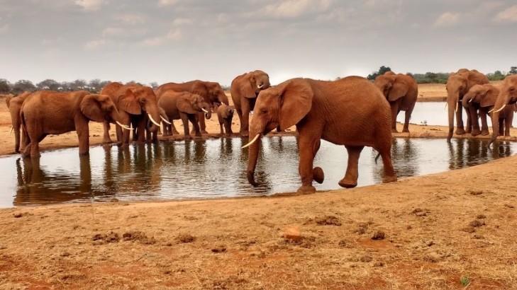 Elephants are beautiful creatures!