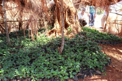 Ipunga Secondary's Poly-ethene Tree Nursery