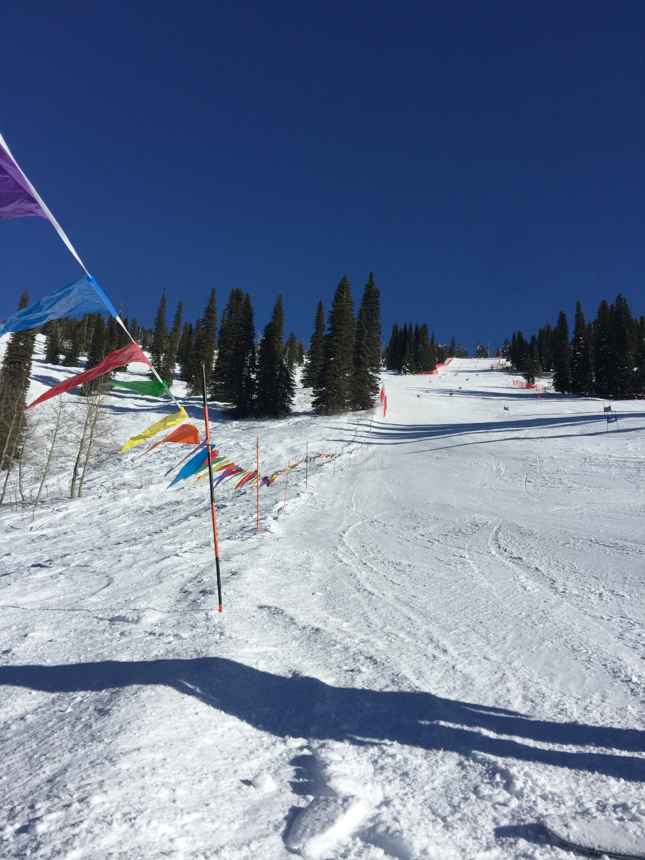 Alpine skiing Competitions – A Year at UBC