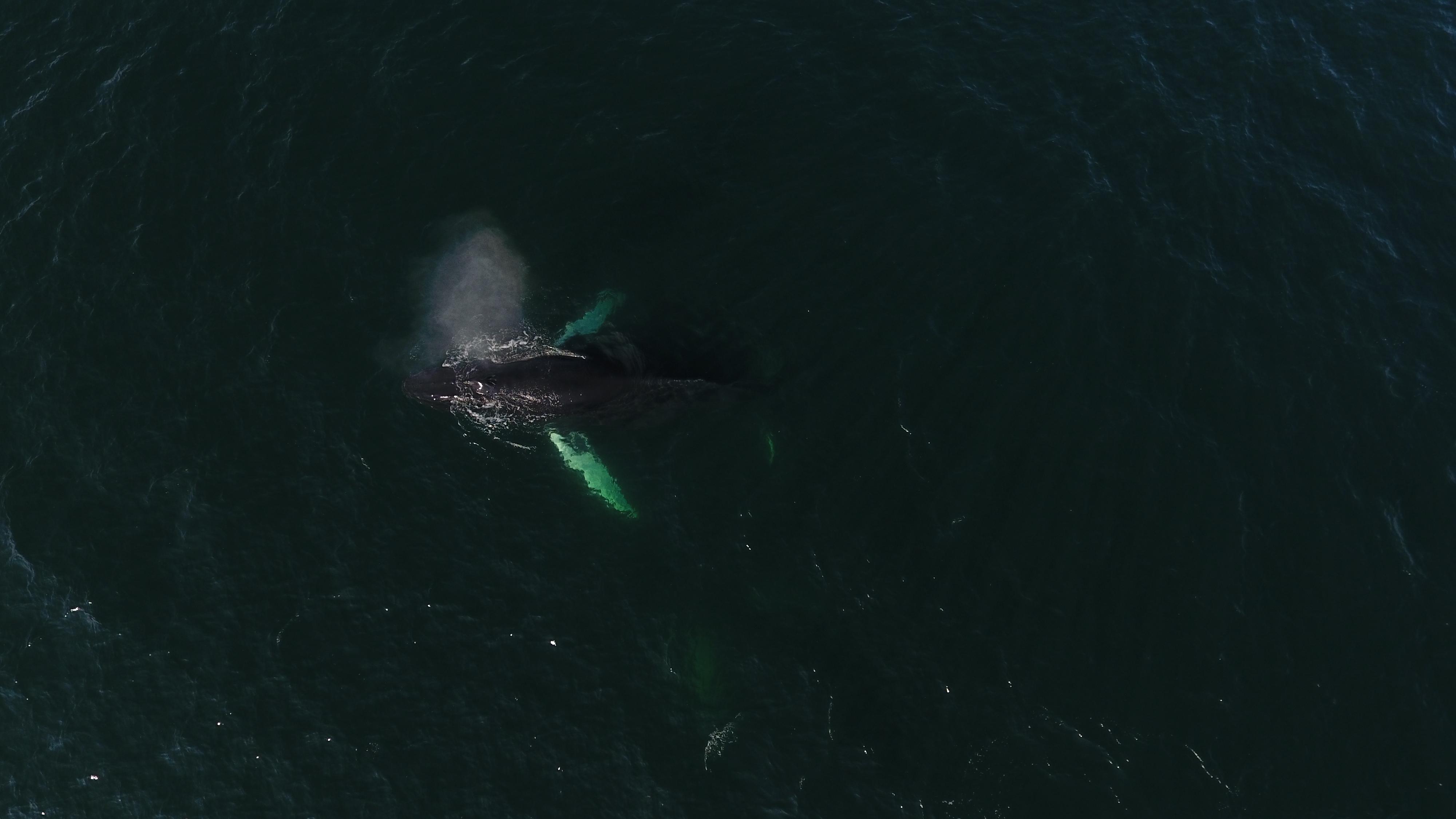 drone-whale.JPG