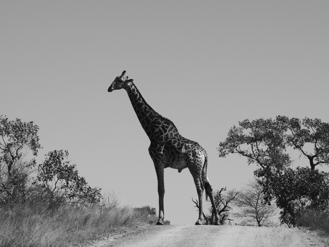 An Introduction to ConservationMedicine
