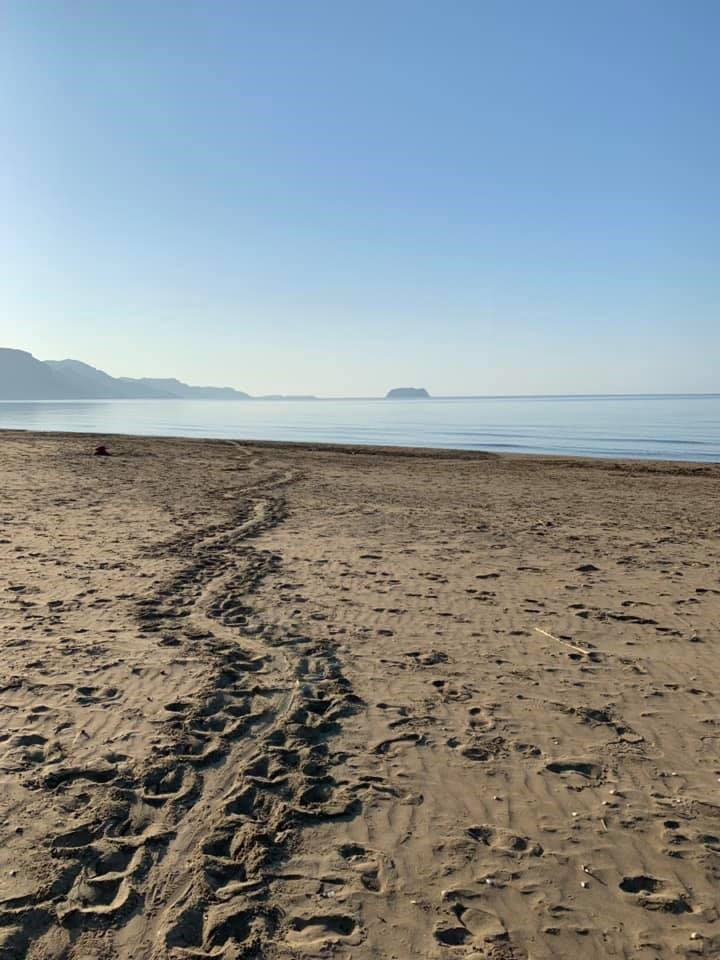 6 weeks of turtle conservation in Zakynthos, Greece